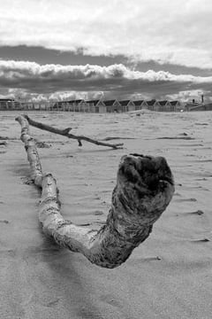 Treibholz von johnvanhfoto