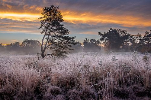 Sfeervolle ochtend op de Beegder Heide
