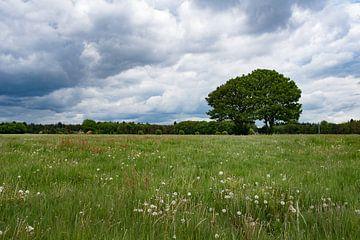 Wolken landschap bij Doesburger molen , Lunteren op de Veluwe von Cilia Brandts