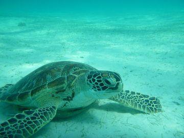 Schildpad onder water van Irma Boonman
