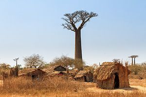 Leven onder de Baobabs van
