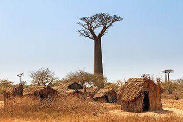 Leven onder de Baobabs von Dennis van de Water