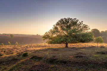 Einsamer Baum auf der Posbank von Midi010 Fotografie