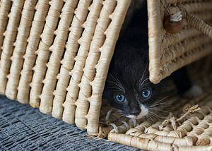 Nieuwsgierige kitten in rieten mand