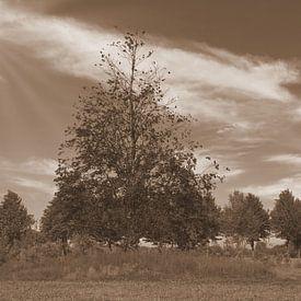 Bomen in sepia van Jose Lok