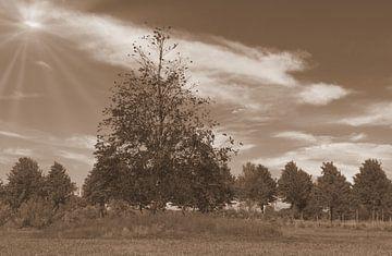 Bäume in Sepia von Jose Lok
