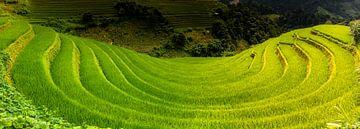 Reisfeld in Mu Cang Chai. von Jeroen Mikkers