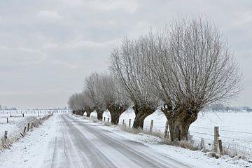 Kopfweiden säumen eine verschneite Straße, Bislicher Insel, Niederrhein von wunderbare Erde