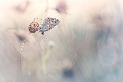 Beauty of dreams van Bob Daalder