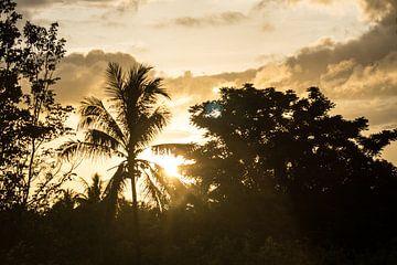 Ceram - Palmboom van Maurice Weststrate