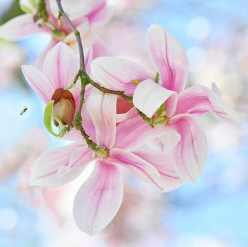 Magnolia van Jeannette Penris