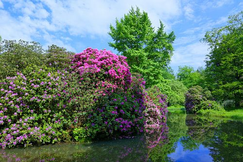 Rhododendron Idyll in the Park van Gisela Scheffbuch