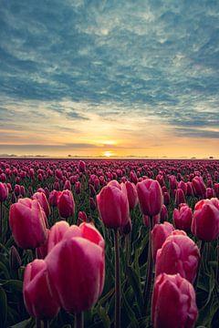 Tulpen von Martijn Kamp