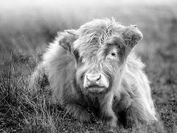 Porträt eines jungen schottischen Hochlandbewohners von Evelien Oerlemans