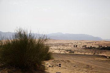 Abu Dhabi Desert van Stefanie Hoekstra