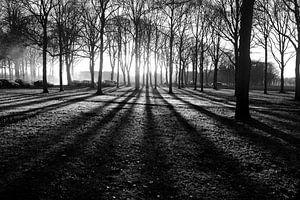 Zonsondergang tussen de bomen (Zwart-Wit)