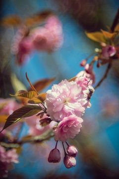 Kirschbaum von Steffen Gierok