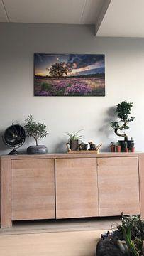 Kundenfoto: Blühende Heide von Martijn van Dellen