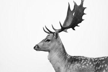 Seitenansicht eines Rehs in Schwarz-Weiß von Wilco Bos