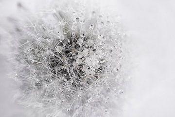 Pluizenbol zwartwit van Anouschka Hendriks