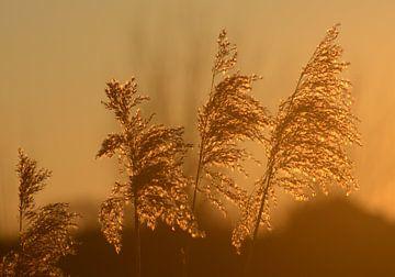 Goldener Glanz von A'da de Bruin