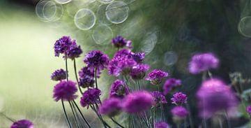 Blume X van Michael Schulz-Dostal