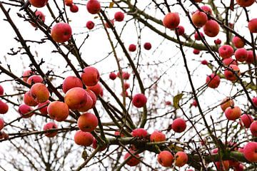 Winterappels wit van Ulrike Leone