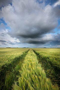 Graanvelden Groningen - Donkere wolken drijven over de graanvelden in het Hoge Land van Groningen ti van Bas Meelker