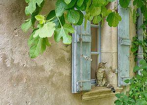Als een kat in Frankrijk