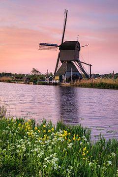 Windmolen en bloemen bij zonsondergang, Kinderdijk, Nederland van Markus Lange