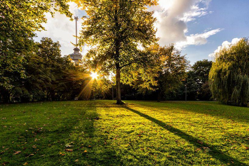 Herfst van Marcel Moonen Visuals