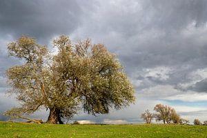 Weide im Herbst von Irene Damminga