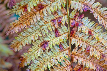 Farnblätter in Herbstfarben von Ron Poot