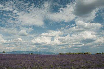 Lavendelveld met bewolking von Bas Verschoor