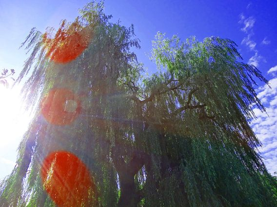 Tree Magic 42