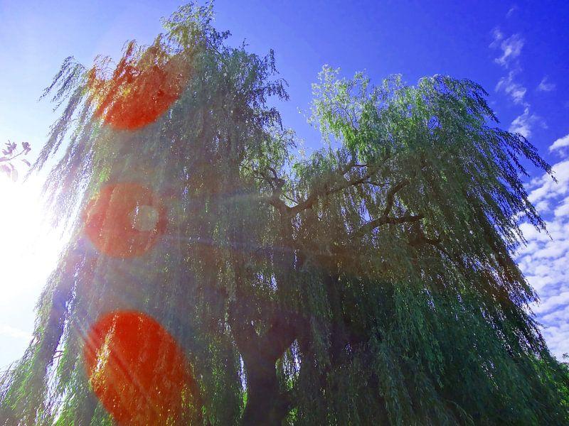 Tree Magic 42 van MoArt (Maurice Heuts)