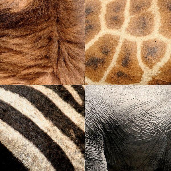 safari dieren van Martijn Wams