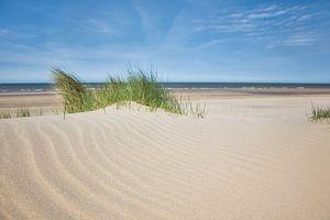 Helmgras op het strand van Fotografie Egmond
