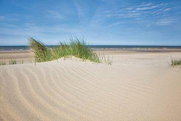 Gras am Strand, Egmond aan Zee (Niederlande). von Fotografie Egmond
