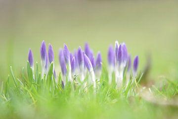springtime van bob van den berg