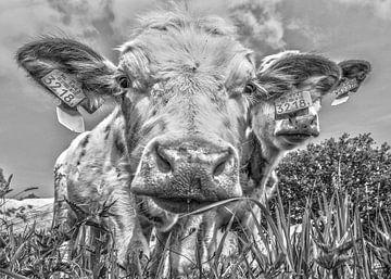 Koe in zwart-wit van Ans Bastiaanssen