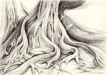 Ficus Macrophylla V