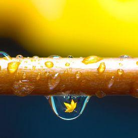 Drop a Leaf (vertical) van Henry van Schijndel