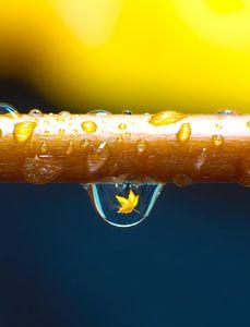 1 Drop A Leaf vertical