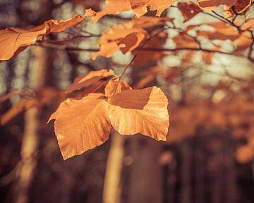 Herfstblaadjes in November