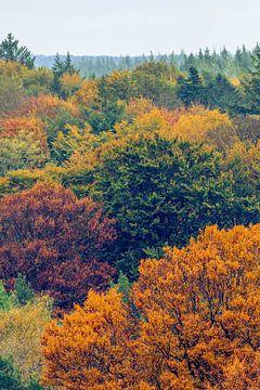 Herfstkleuren van Renzo van den Akker