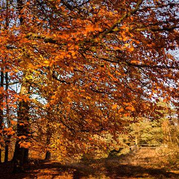 Herfstblaadjes in November von Erik Rudolfs