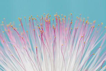 Roze en blauw van Laura Vink
