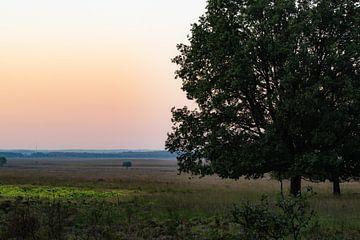großer Baum auf der Heide von Tania Perneel