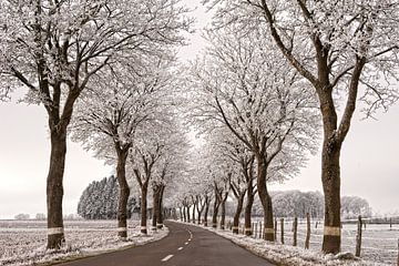 Mooi winterse landschap van Anne Meyer